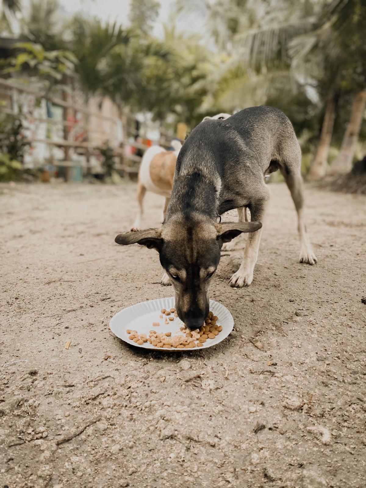 Pes na Filipinih Vir: Hope for Strays