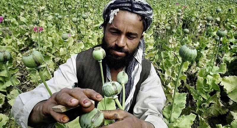 Kmet v Afganistanu med negovanjem svojega pridelka