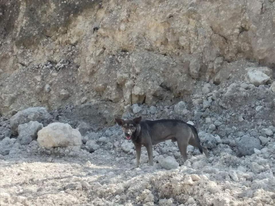 Pes na Filipinih