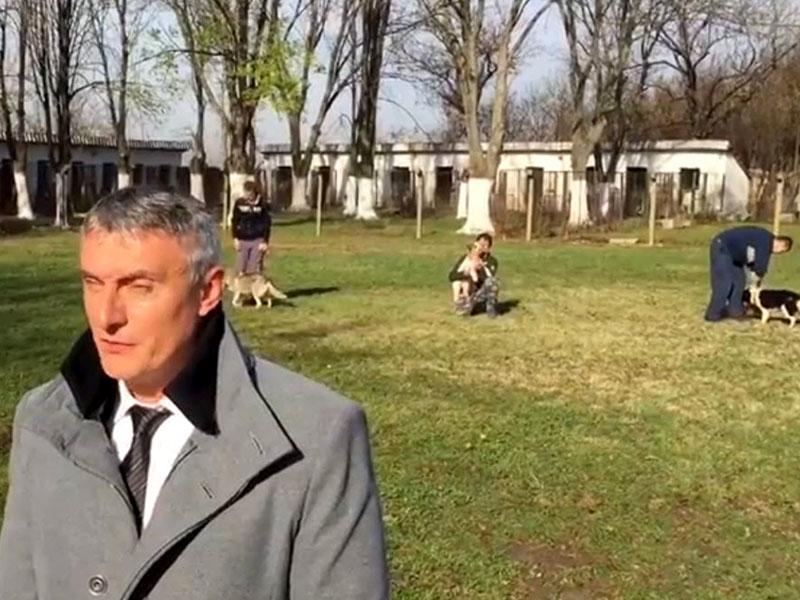 Psi zaporniki / Aleksandar Alimpić