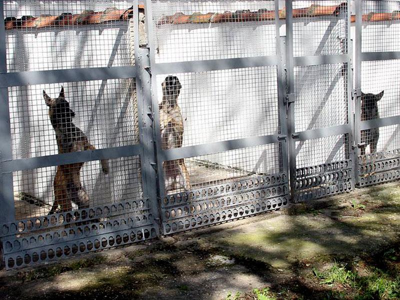Psi zaporniki