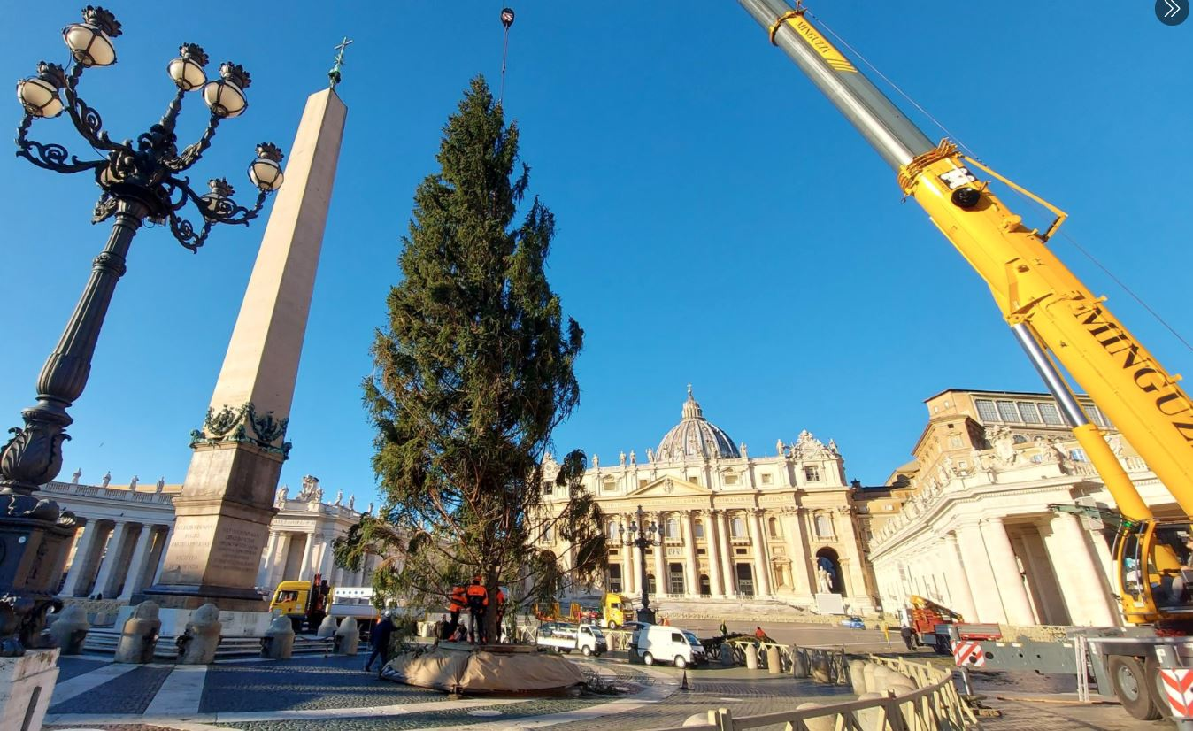 Zakaj smreka za 100.000 evrov, ki jo je Vlada podarila Vatikanu na stroške davkoplačevalcev, zgleda kot oskubljena kura?