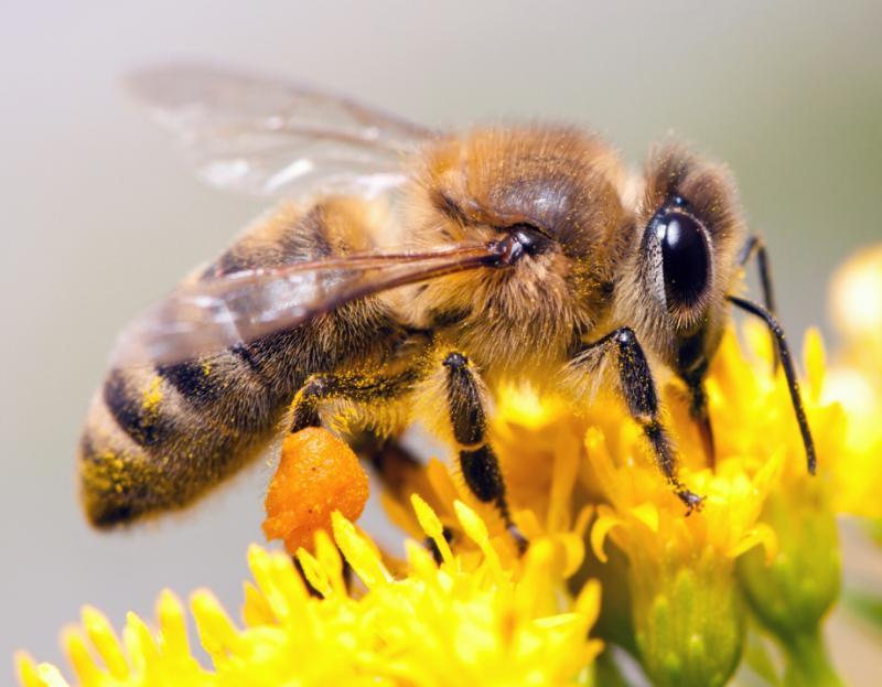 Z novo spletno stranjo v podporo za svetovni dan čebel