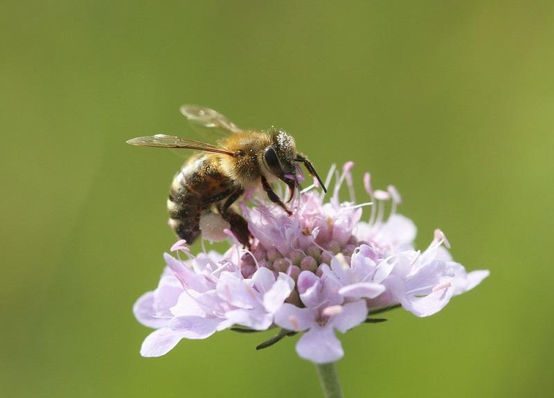 Čebele Izraelcema preprečile krajo panjev