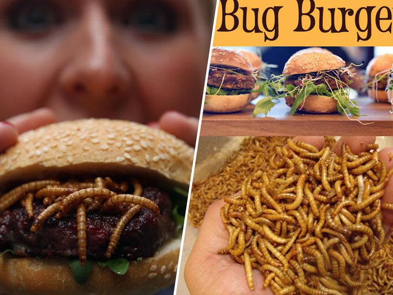 Črve za kosilo? Žuželke in druga golazen zaradi odločitve evropske agencije vse bliže krožnikom potrošnikov v EU