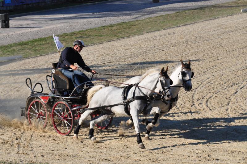 Kobilarno Lipica lani obiskalo skoraj 89.000 gostov