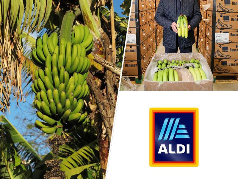 »Banana republika« Ekvador nad nemški Aldi zaradi dampinga cen - banan