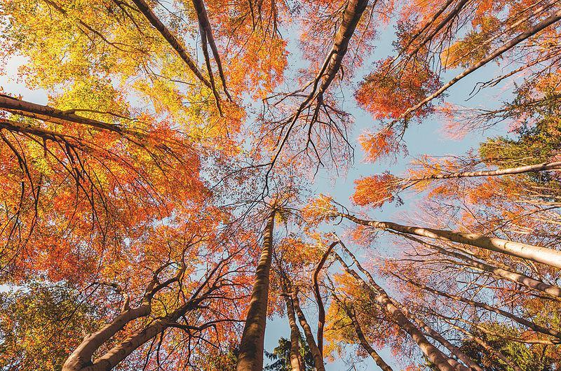 Študija: Naši civilizaciji zaradi uničevanja gozdov grozi 90-odstotna verjetnost kolapsa že v naslednjih desetletjih