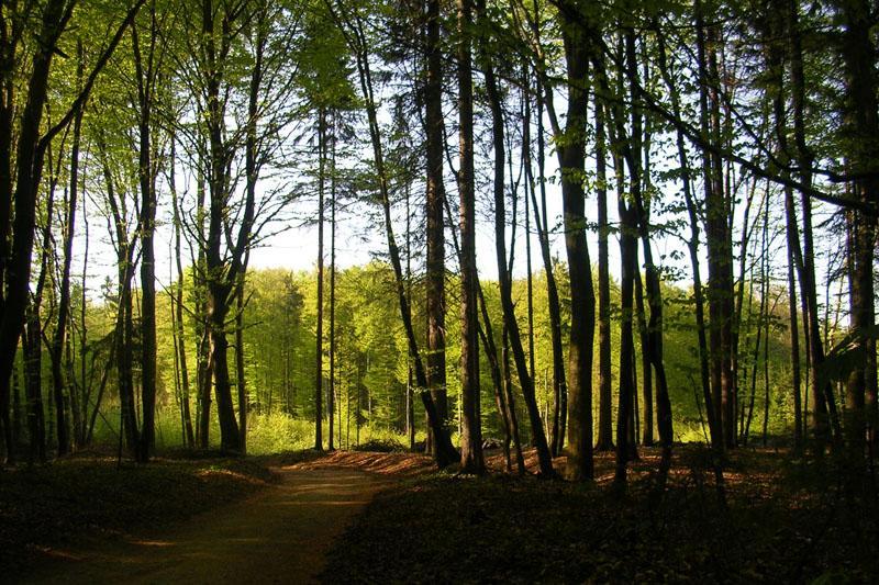 Sprememba upravljanja z državnimi gozdovi del koncesionarjev ...