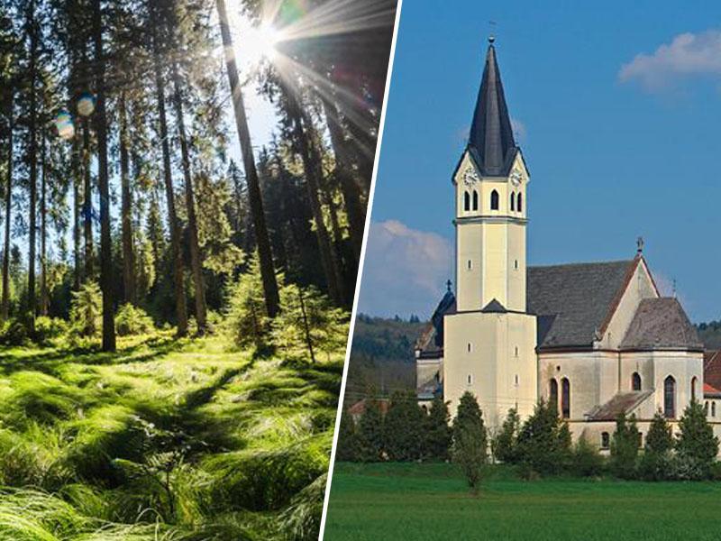 Gregor Vesel: »Zakaj je Slovenija cerkvi vrnila gozdove, če ti dejansko niso bili cerkveni?«