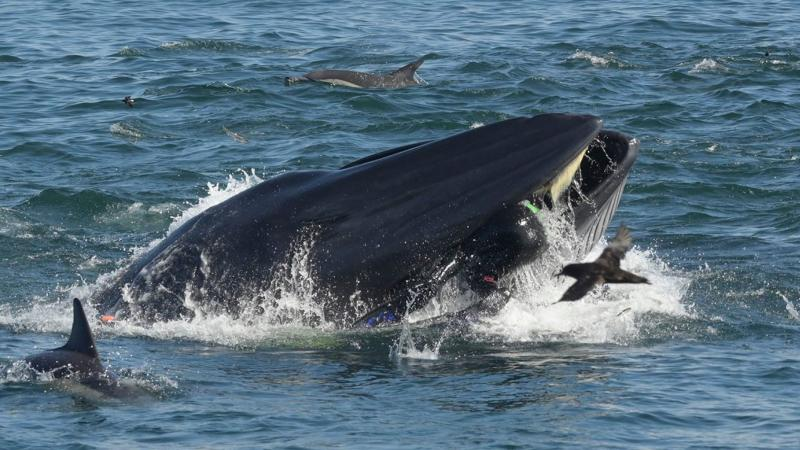 Resnična »svetopisemska« zgodba: kit skorajda pojedel potapljača