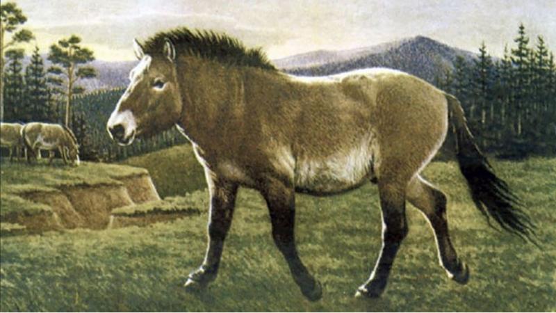 Ruski znanstveniki našli kri v tekočem stanju v 42 tisoč let zmrznjenem truplu konja