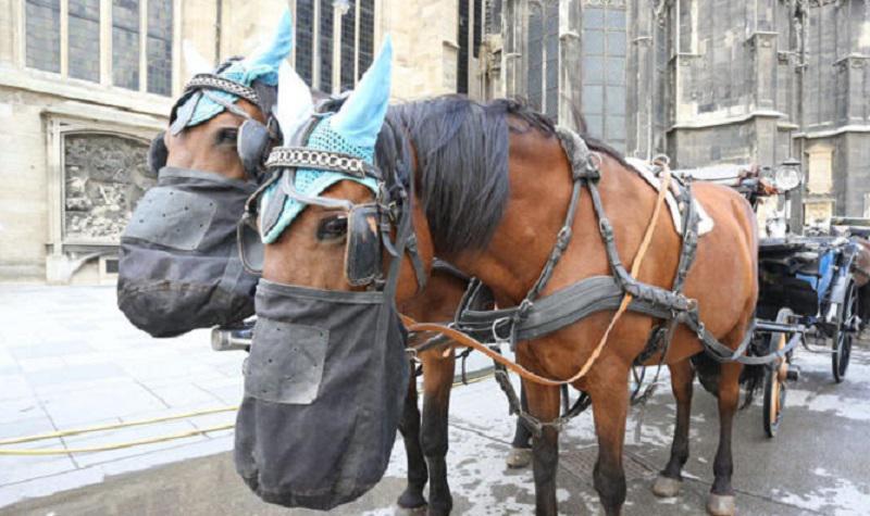 Zaradi visokih vročin tudi konji dobili »vročinski dopust«
