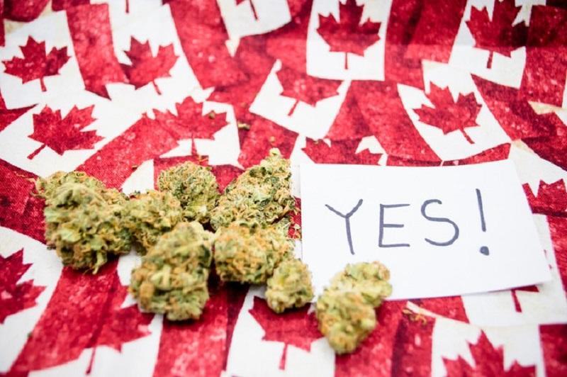 V Kanadi marihuana dovoljena tudi v rekreativne namene