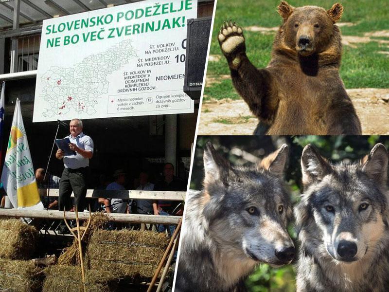 Šarec in kmetje o medvedih in volkovih: predlagane »ustne odločbe« za »odvzem«, čez dva meseca morda znova protesti