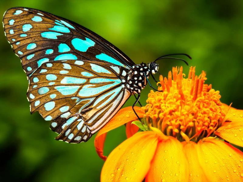 Gorske živali, rastline in žuželke se zaradi segrevanja selijo vse višje