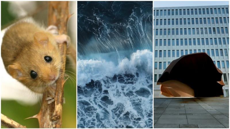 Mišji most, surfanje na reki, zlato gnezdo: neverjetni načini za zapravljanje denarja davkoplačevalcev