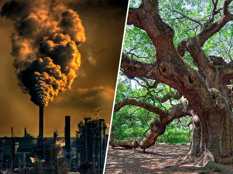 Nova peticija: »Ni podnebnih izrednih razmer. Ogljikov dioksid pa je hrana za drevesa!«