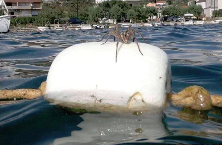 »Ne gremo več v morje!« Kopalci posneli ogromnega pajka na vodi, zagrabila jih groza. Toda to ni vse ...