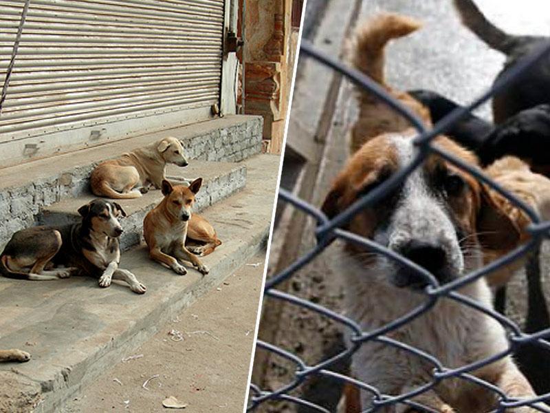 Svetovni mediji so navdušeni nad nenavadnim penzionom za pse v - zaporu