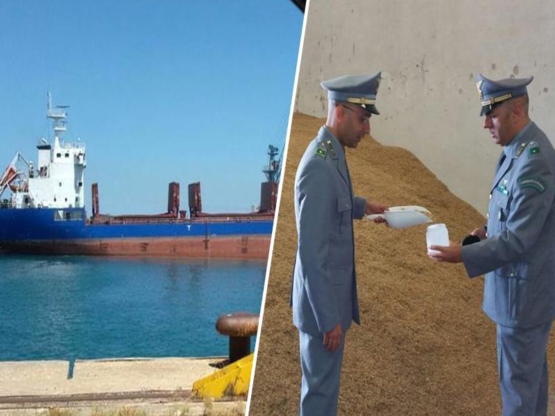 V italijanskem pristanišču Bari so zasegli 50 tisoč ton kanadskega strupenega žita