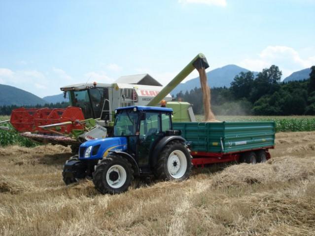 Pridelovalci pšenice si zaradi slabše letine želijo pomoči države