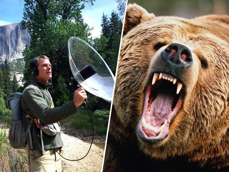 Medved ubil glasbenika, ki je v gozdu snemal glasove narave