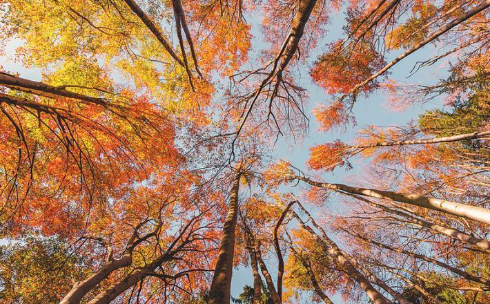Gozd, drevesa, les