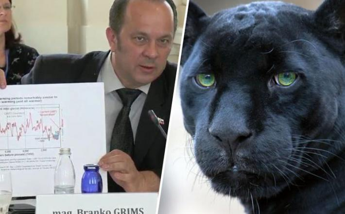 Grims in črni panter