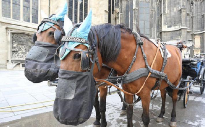 Konji na Dunaju