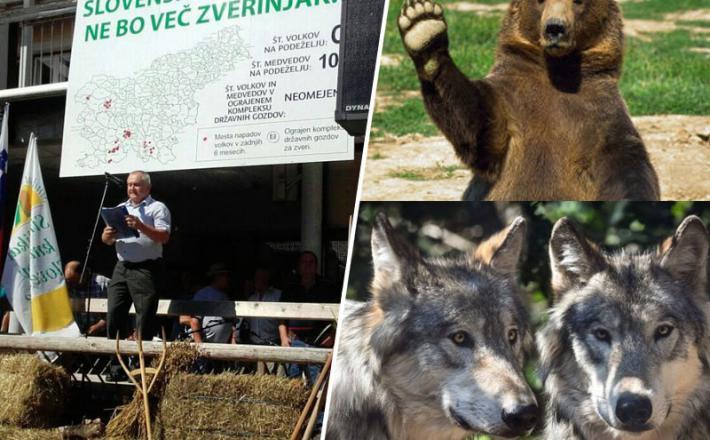 Medved, volkovi, kmetje in minister Zajc