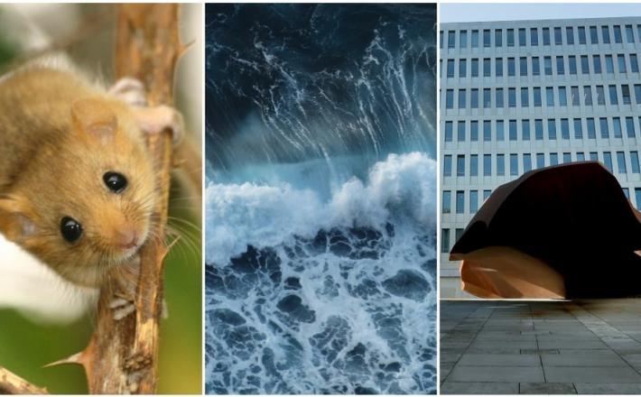 Miš, most in valovi - kako inventivno zapraviti državni denar