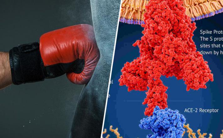 Nokdavn: koronavirus uspe prelisičiti tudi cepiva...
