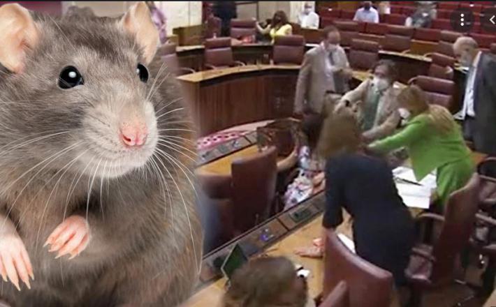 Groteskna reakcija parlamentarcev je do solz nasmejala uporabnike interneta.