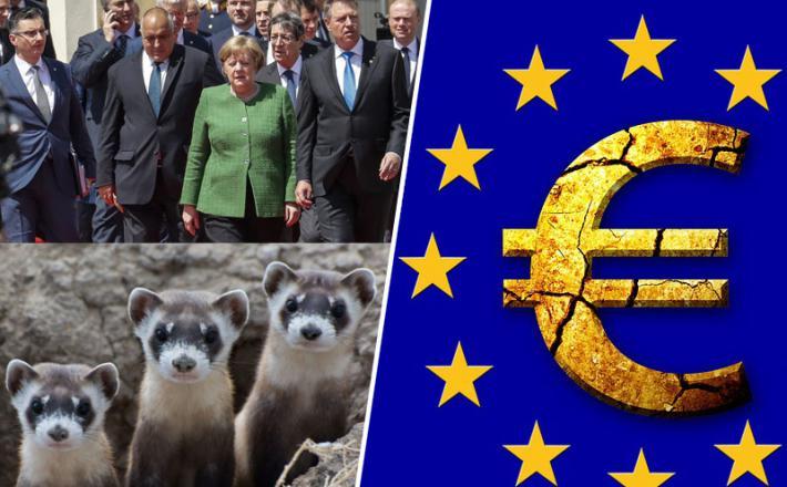 Voditelji EU - kot dihurji v vreči...