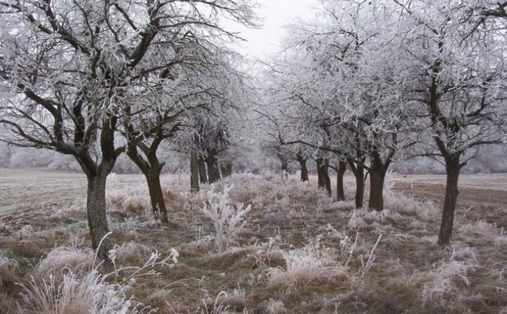zima - mraz -nizke temperatura - ponazoritvena fotografija