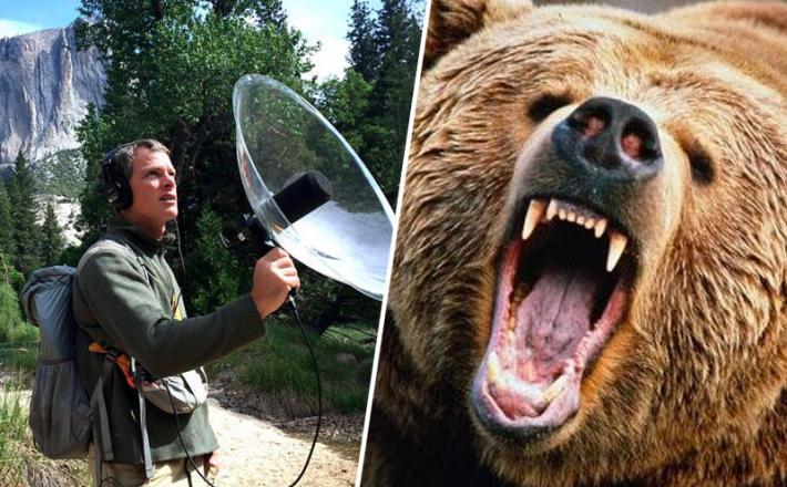 Snemanje zvokov narave in medved