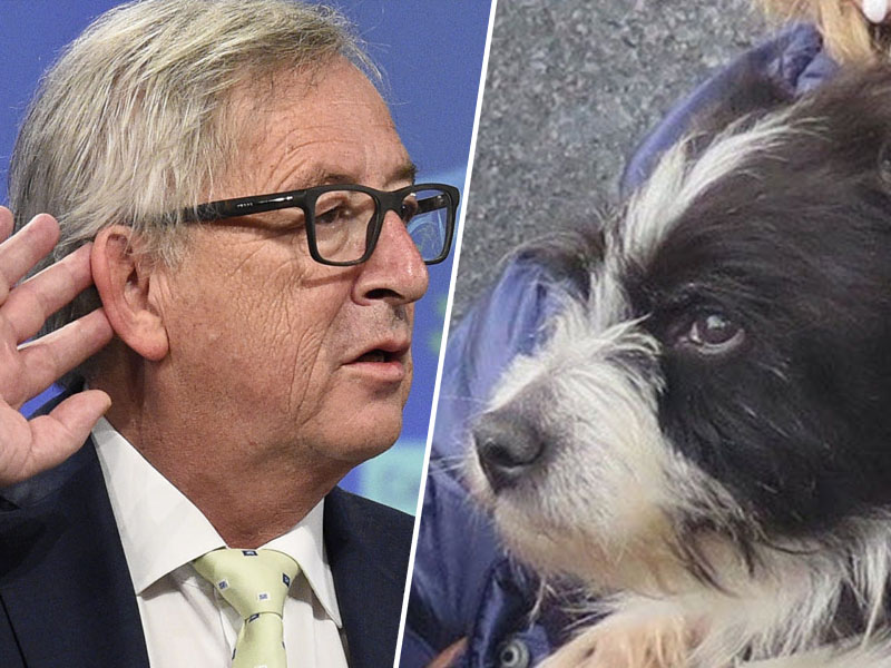 Juncker in posvojeni pes