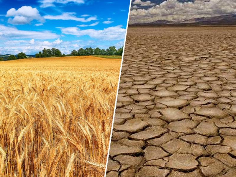 Žitno polje, suša